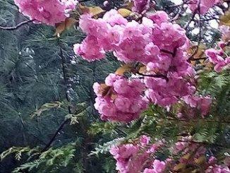摄理教,月明洞,花朵